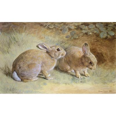 Frank Paton – Two Rabbits, 1899