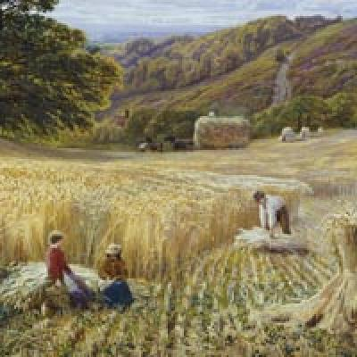 Surrey Harvest Time near Holmbury Hill G V Cole Print